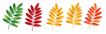 Autumn vector set with rowan leaves. Forest botanical elements for decoration.