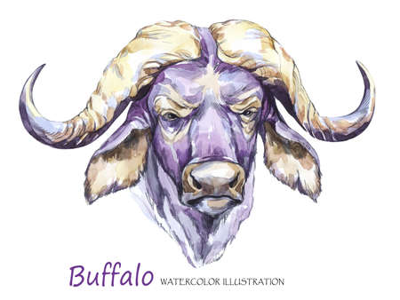 Watercolor formidable bull on the white background. African animal. Wildlife art illustration. Can be printed on T-shirts, bags, posters, invitations, cards, phone cases, pillows. Place for your text.
