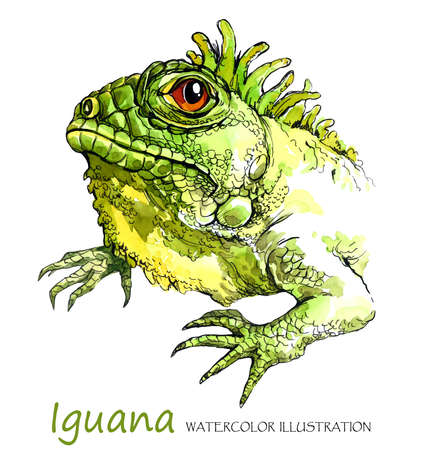 Watercolor Iguana on the white background. Exotic animal. Wildlife art illustration. Can be printed on T-shirts, bags, posters, invitations, cards, phone cases, pillows. Place for your text. Stock Photo