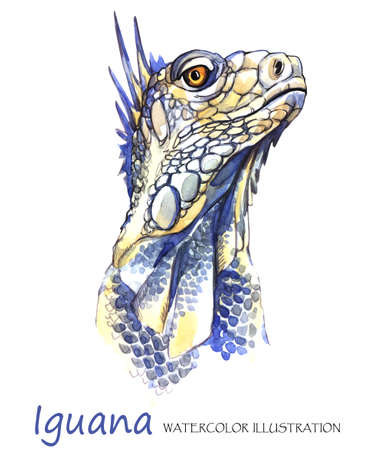 Watercolor Iguana on the white background. Exotic animal. Wildlife art illustration. Can be printed on T-shirts, bags, posters, invitations, cards, phone cases, pillows. Place for your text. 版權商用圖片