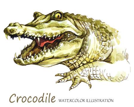 Aquarell-Krokodil auf dem weißen Hintergrund. Afrikanisches Tier. Wildlife-Kunst-Illustration. Kann auf T-Shirts, Taschen, Plakaten, Einladungen, Karten, Telefonkästen, Kissen gedruckt werden. Platz für Ihren Text. Standard-Bild - 80860741