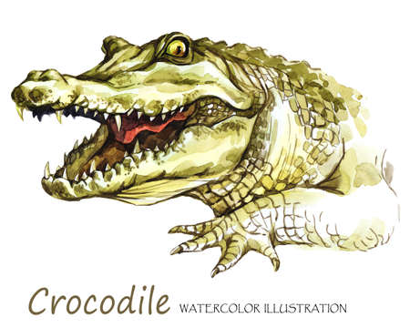 Watercolor Crocodile on the white background. African animal. Wildlife art illustration. Can be printed on T-shirts, bags, posters, invitations, cards, phone cases, pillows. Place for your text.