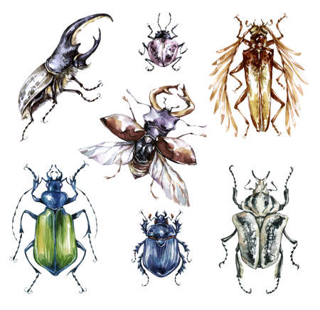 Watercolor beetles collection on a white background. Animal, insects. Entomology. Wildlife. Can be printed on T-shirts, bags, posters, invitations, cards, phone cases pillows DIY clipart