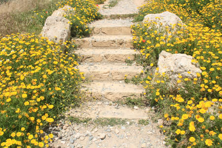 Yellow flowers in the garden