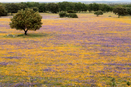 Spring flowers in Alentejo, Portugal Stock Photo