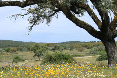 alentejo: Spring flowers in Alentejo, Portugal Stock Photo