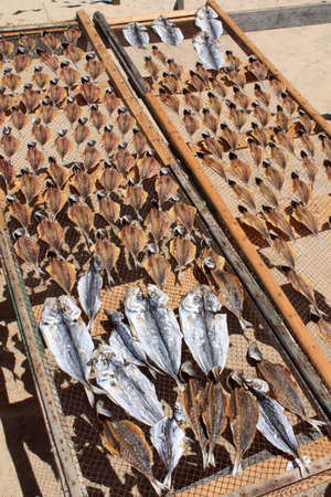 Dried fishes on the sun in Nazare, Portugal photo