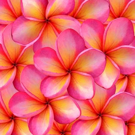 frangipani Background 版權商用圖片 - 18461872