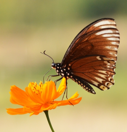 Butterfly on a yellow flower Stock Photo - 19279464
