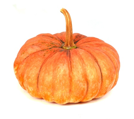 Pumpkin on white background photo