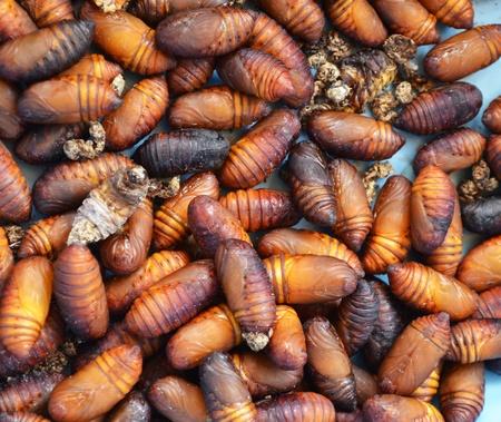 chrysalis silkworm photo