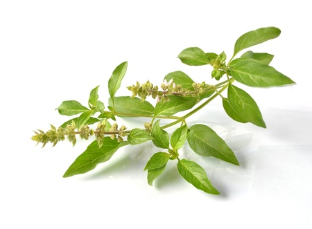 Basil flower Stock Photo