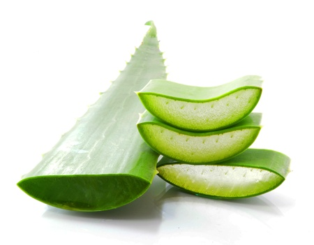 aloe vera fresh leaf isolated white background