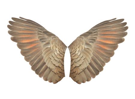 Pinion wings on the sprawling white 版權商用圖片