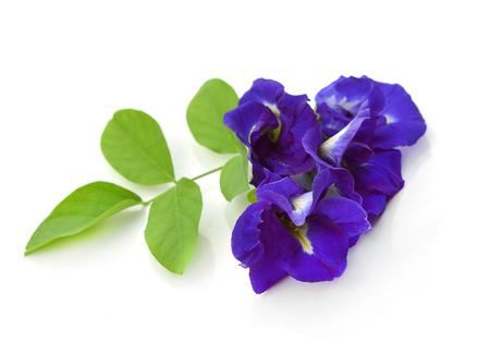 pea shrub: Clitoria ternatea or Aparajita flower isolated on white background Stock Photo