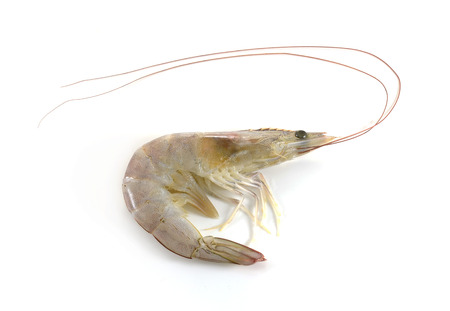 shrimp on white background 스톡 콘텐츠