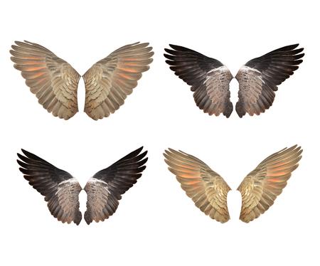 pajaros volando: Piñón en el blanco en expansión