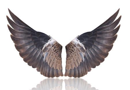 alas de angel: Pi��n en el blanco en expansi�n