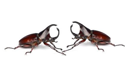 horn like: Rhinoceros beetle