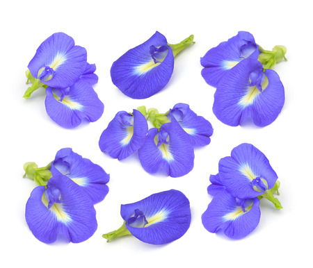Fabaceae: Clitoria ternatea or Aparajita flower isolated on white background Stock Photo