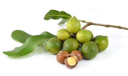 macadamia nuts on white background photo