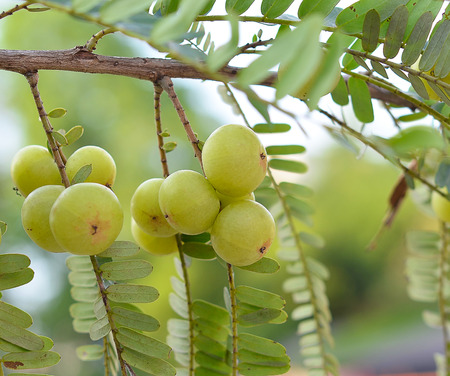 formulation: gooseberries