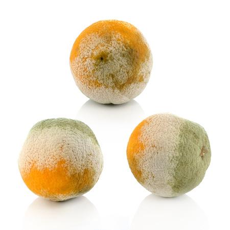 spoilage: a moldy orange on a white background