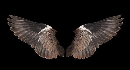 Vogelflügel auf schwarzem Hintergrund isoliert Standard-Bild - 35518138
