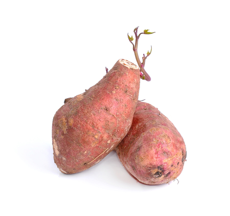 yams photographed on a white background. photo