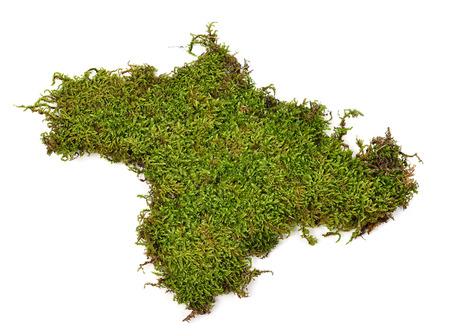 Grünes Moos auf weißem Hintergrund Standard-Bild - 43967941