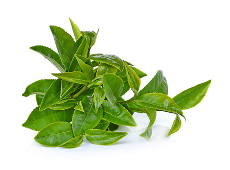 Green tea leafs isolated on white background