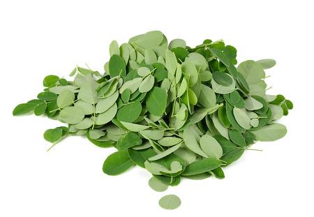 miracle leaf: Moringa oleifera leaves isolated on white background Stock Photo