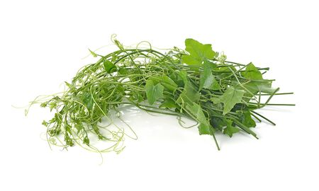 ivy vine: Ivy Gourd on whaite background