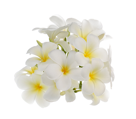 white frangipani flower isolated white