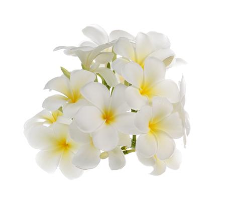 witte frangipanibloem geïsoleerd wit Stockfoto