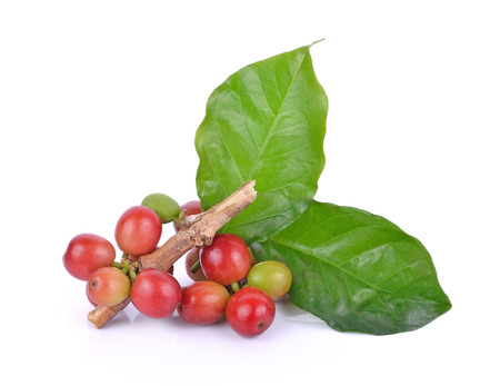 coffee beans on white background. 스톡 콘텐츠