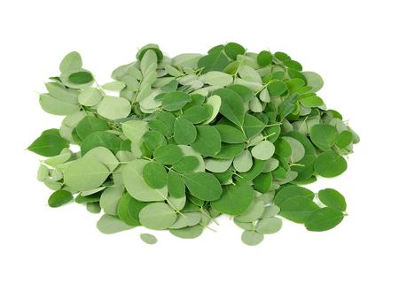 sajna: Moringa oleifera leaves isolated on white background Stock Photo
