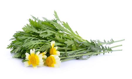 coronarium: Chrysanthemum coronarium on white background Stock Photo