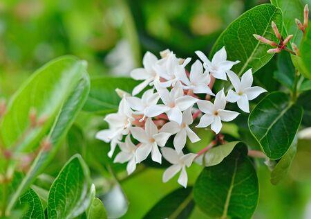 crimson colour: flower  Karanda Stock Photo