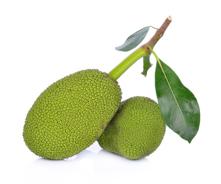 young fruit jackfruit on white background 스톡 콘텐츠