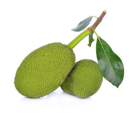 young fruit jackfruit on white background 版權商用圖片