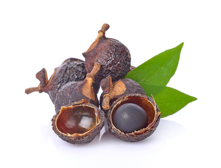 Soap nut tree isolated on  white background