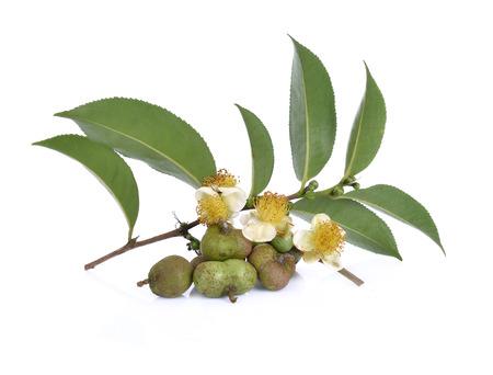 白い背景の種子、花、茶