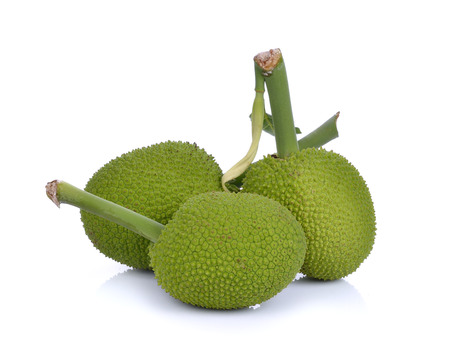 Breadfruit;young fruit jackfruit on white background 스톡 콘텐츠