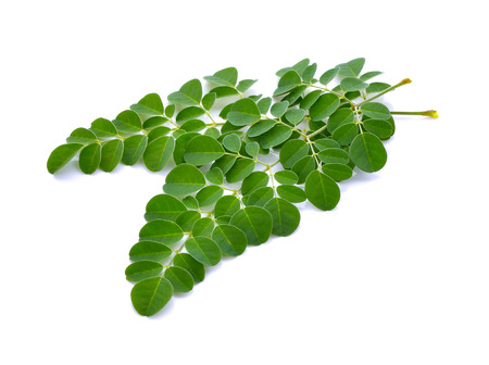 Moringa oleifera leaves on white background