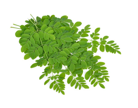 malunggay: Moringa oleifera leaves on white background