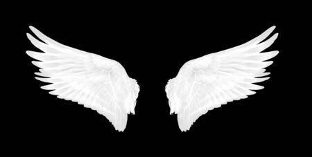white wings of bird on black background Foto de archivo