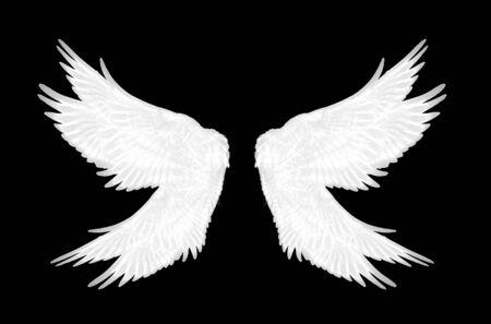 ailes blanches d'oiseau sur fond noir Banque d'images