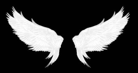 alas blancas de pájaro sobre fondo negro Foto de archivo