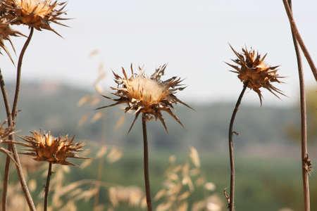 sapless: Nature Photographey:::::by Anat Confino Stock Photo